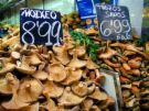 Mushrooms Barcelona